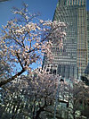 Nogizaka3_3